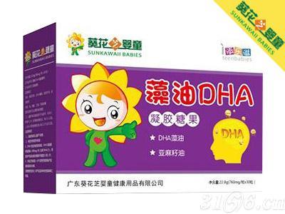 藻油DHA招商
